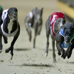 Wentworth Park Greyhound Racing Foto