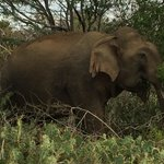 Elephant posed for us!