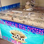 Every oyster is guaranteed a Pearl, you have a choice of making a jewelry out of it!