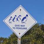 Penguin sign outside the centre.