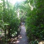 Heading to Bang Pae Waterfall