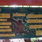 At the Gibbon Rehabilitation Centre
