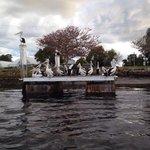 Un banc de pelicans