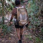 Spirit of the Rainforest Walk