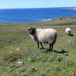 les résidents permanents d'Achill Island
