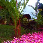 Photo of Heliconias Nature Lodge