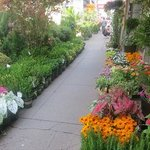 Plenty of flowers in the Chelsea District