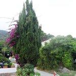 Foto de Villa dei Limoni