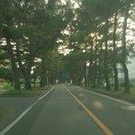 旧東海道のサイドを松並木が延々と続く