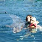 stroking dolphin