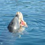 kissing dolphin