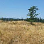 Mima Mound
