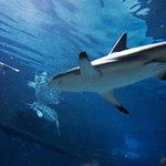 Walking through the shark tank