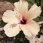 fiore del giardino