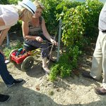 Learning to tie the vines