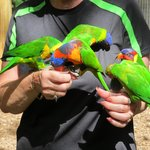 Parrots drining the nectar from cups I hold