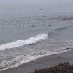 la spiaggia e gli uccelli