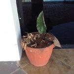 Las plantas en estado de descuido
