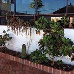 Jardines sin mantenimiento plantas muertas