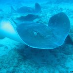 Atlantic Rays on our last dive with Aqua-Marina Dive Center