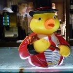 Peabody Ducks abound!
