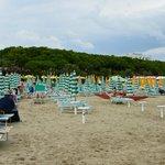 Strand am Pinienwald
