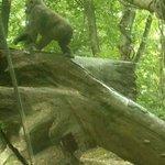 Gorillas in the urban jungle