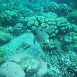 tortue au jardin de corail