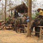 Éléphants sur le site