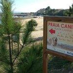 Dos playas caninas en los alrededores