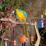 Le perroquet du bar