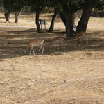 Bambi y los amigos