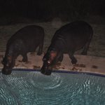 Visitors drinking from the swimming pool