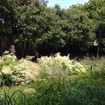 Jardim Branco