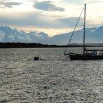 Barco e glaciares ao fundo visto da costanera