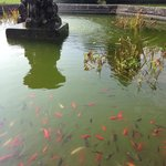 Fishes in the fountain.