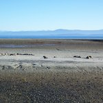 Looks like Mars, is Qualicum Beach