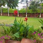 Its garden