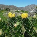 Sea Villa Glen Craig - Gorgeous Flora