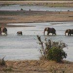 kenya -tsavo est safari