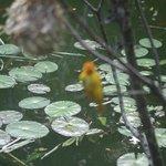 Wildlife Pond at the Bahari Restaurant