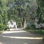 Pinewood Resort & Spa Garden pathway