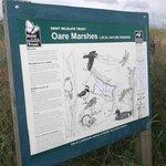 Oare Marshes Bird Reserve