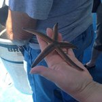 live starfish