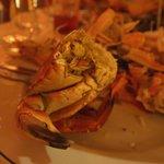 Amazing crab!