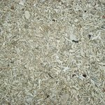 This is what the beach sand is