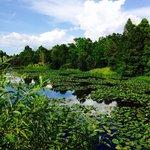Lush Ponds