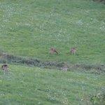 deer OH Deer !