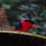 Bird in aviary