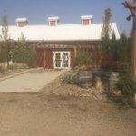 Aurora Colony Vineyards